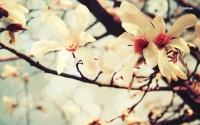 2K Flower Wallpapers HD