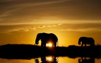 Sunset Elephants Wallpaper 1080p