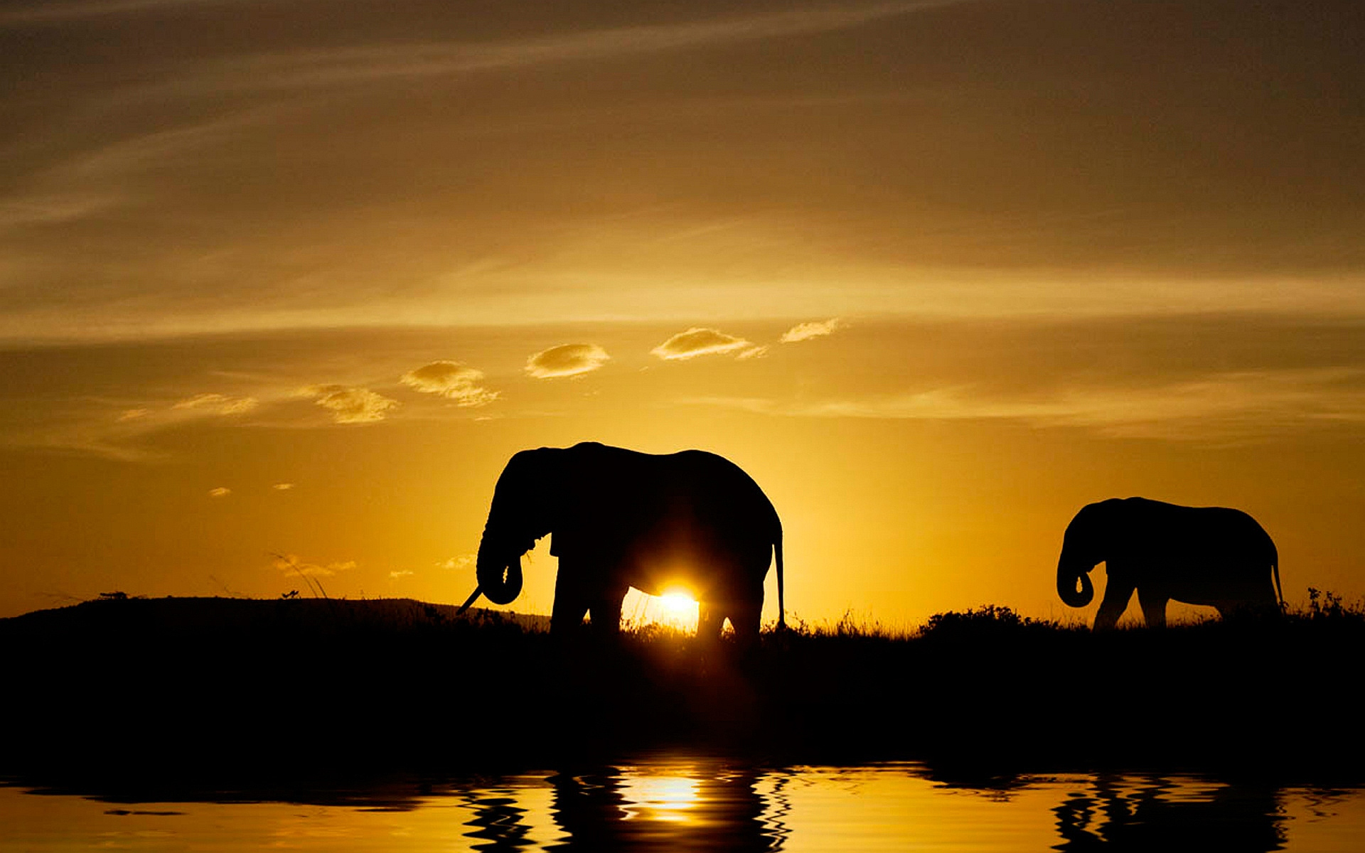 Sunset Elephants Wallpaper 1080p Wide Screen Wallpaper 1080p 2k 4k