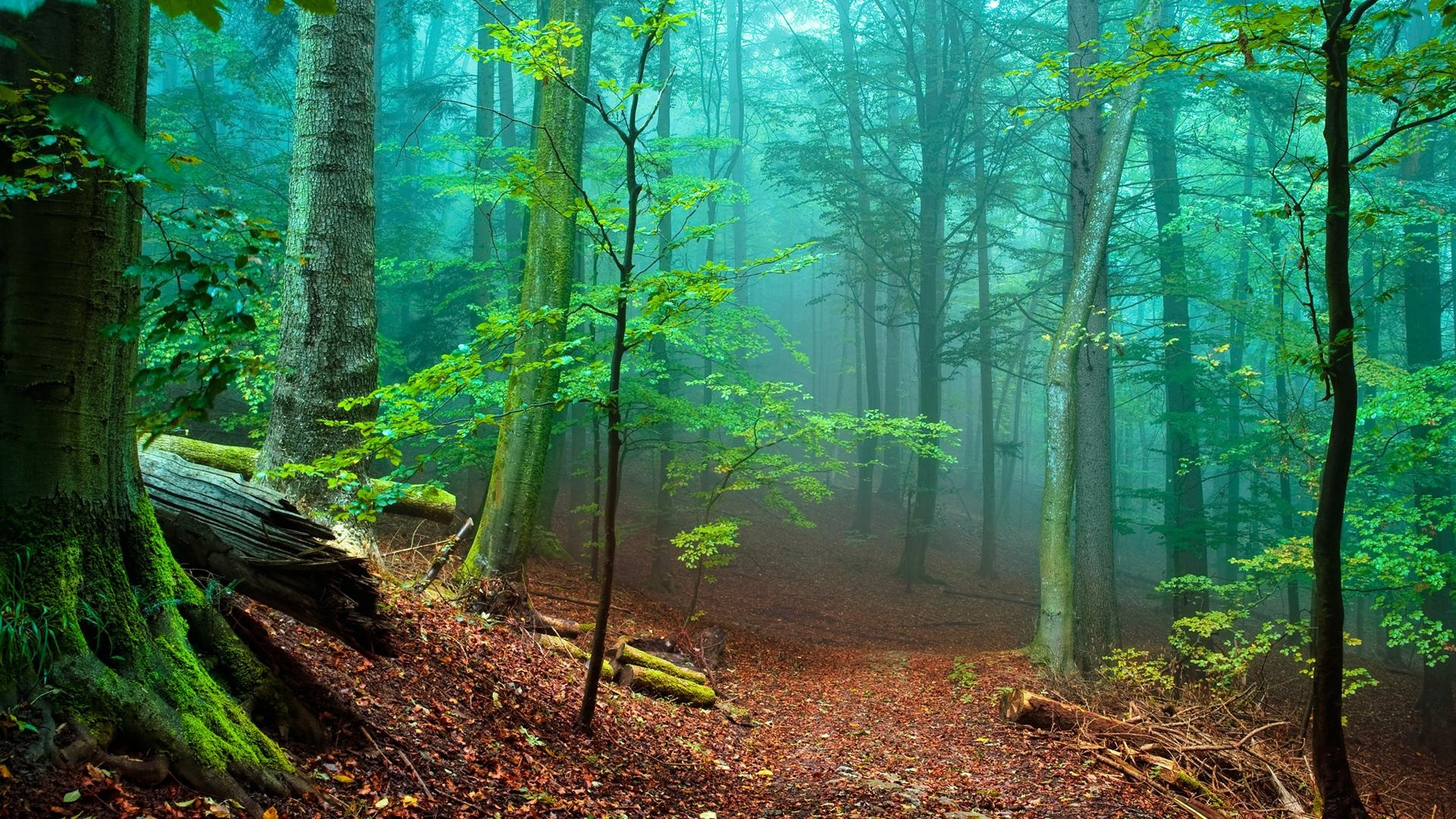 Nature Trees Forest Woods Magic Wallpaper 1920 215 1080 1080p