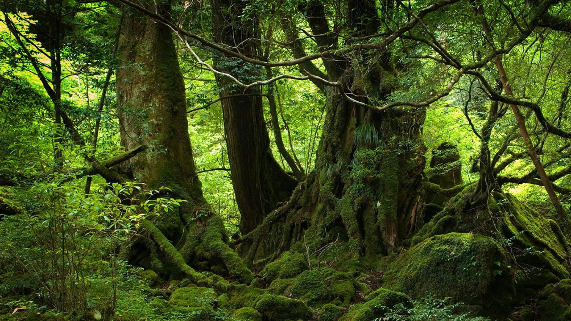 Nature Trees Forest Woods Magic Wallpaper 1920×1080 1080P WideScreen | Wide Screen Wallpaper ...