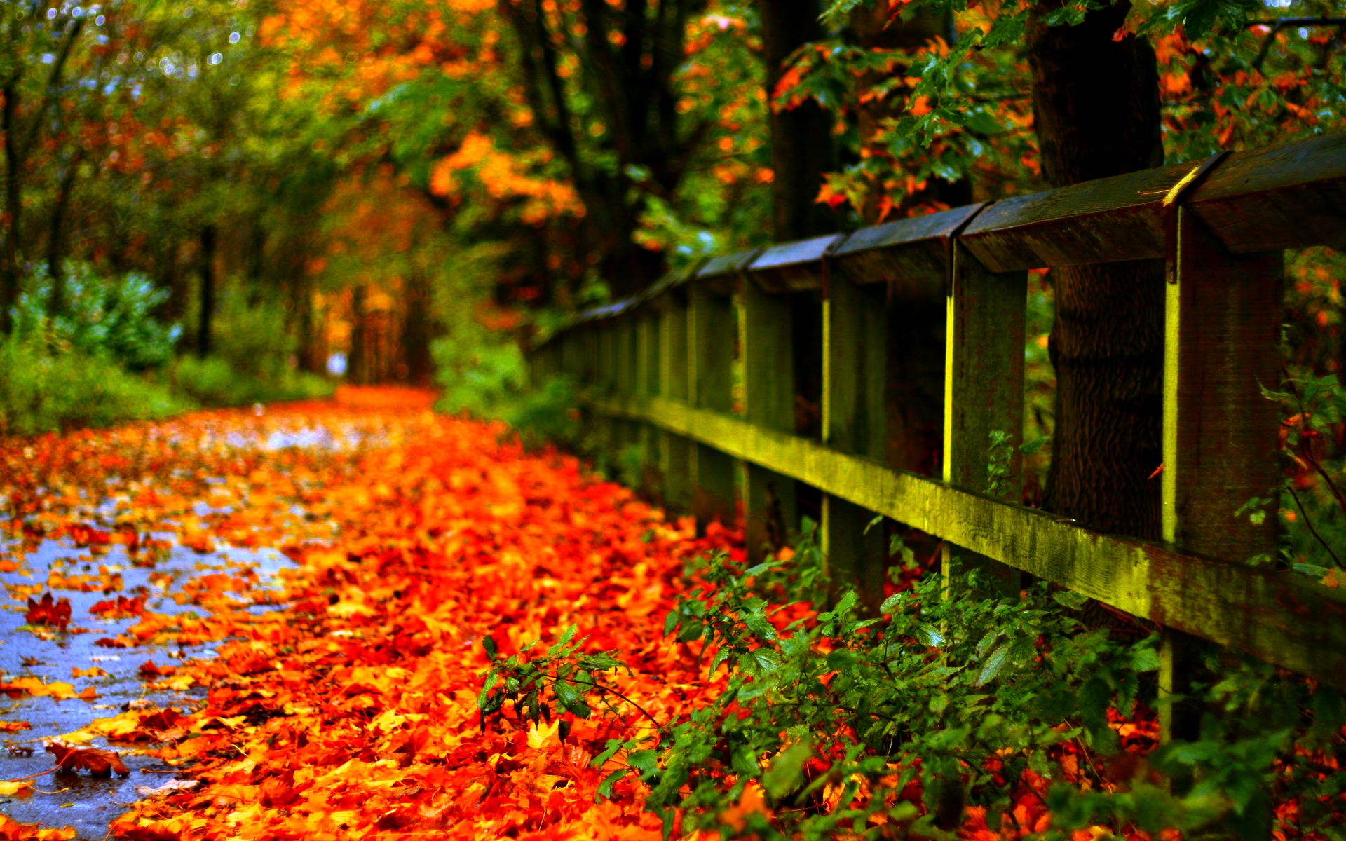 awesome nature wallpapers 1080p