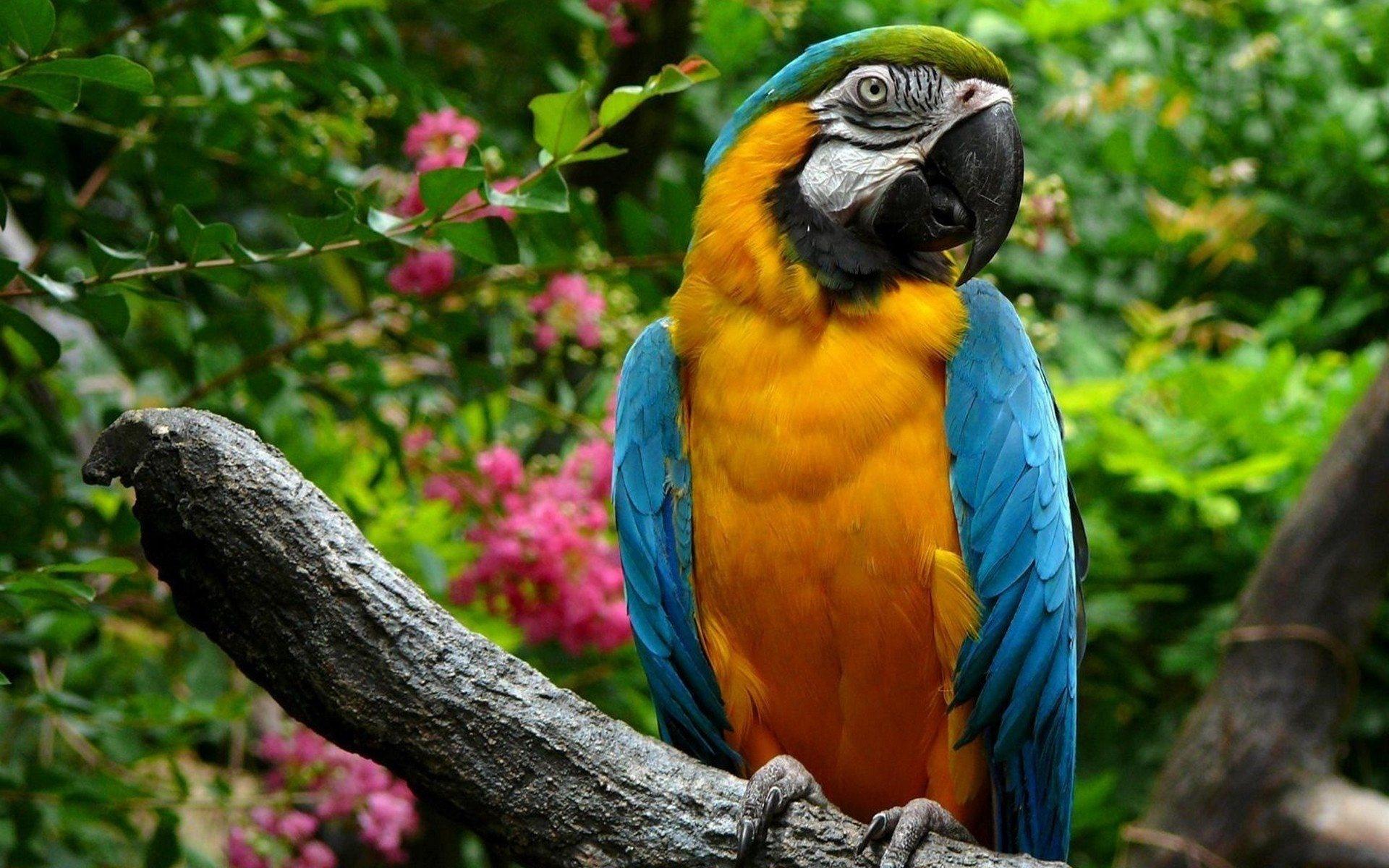 parrot 1080p wallpaper wide screen wallpaper 1080p 2k 4k