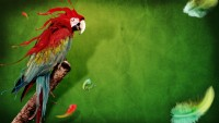 Parrot 1080p Wallpaper