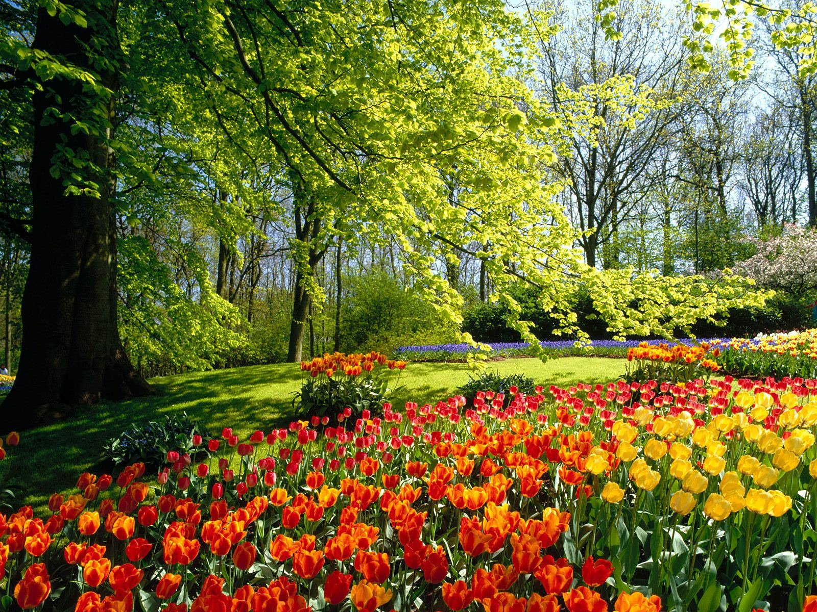 spring nature wallpapers 1080p - photo #37