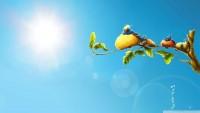 Funny Birds Wallpaper