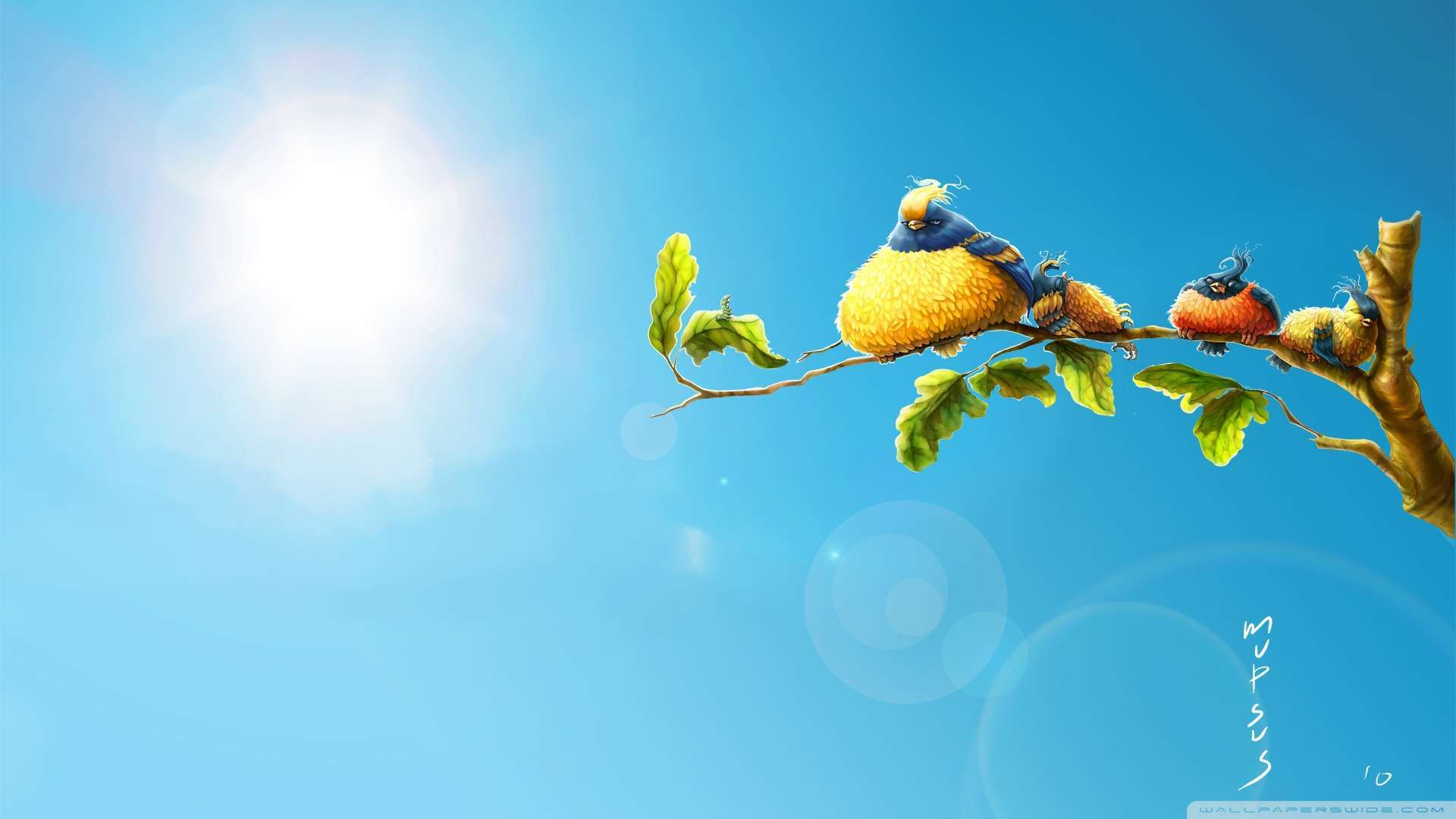 Funny Birds Wallpaper  Wide Screen Wallpaper 1080p,2K,4K