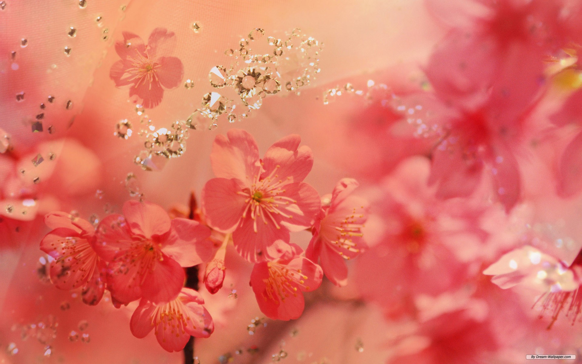Spring flower wallpapers wide screen wallpaper 1080p2k4k spring flower wallpapers mightylinksfo