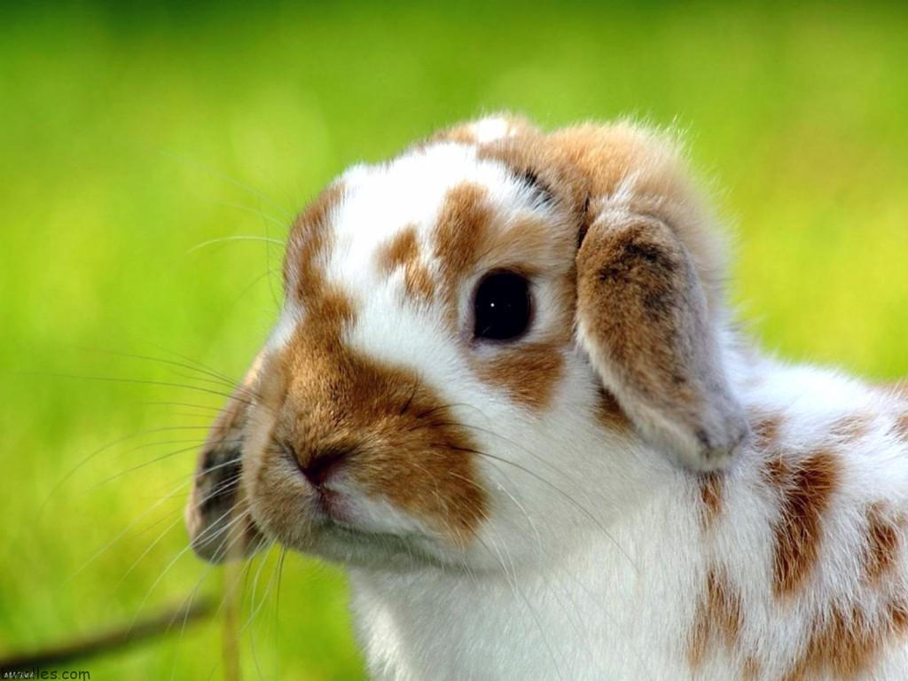 How Do Rabbits Get Food