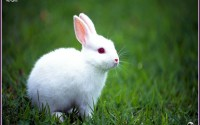 Rabbit Wallpapers 1080p