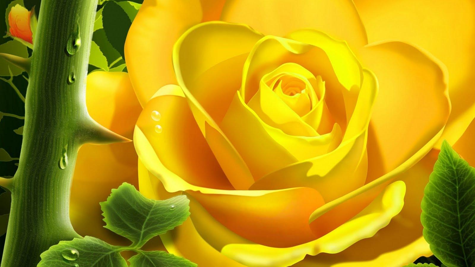 Yellow Rose Free Wallpaper For Download Desktop × Hdtv