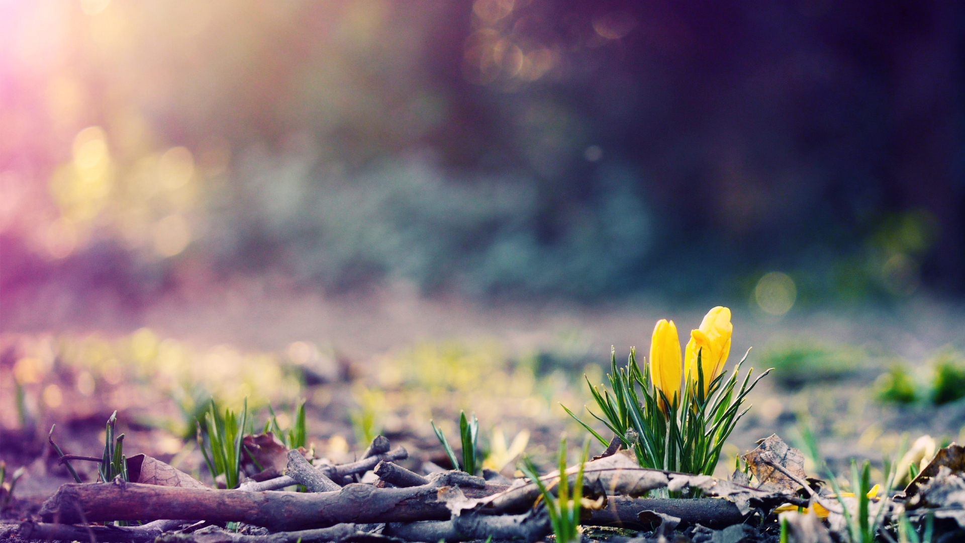 spring nature wallpapers 1080p - photo #23