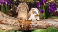 Rabbit 1080p Wallpaper