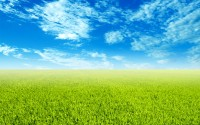 Sky and Grass Wallpaper