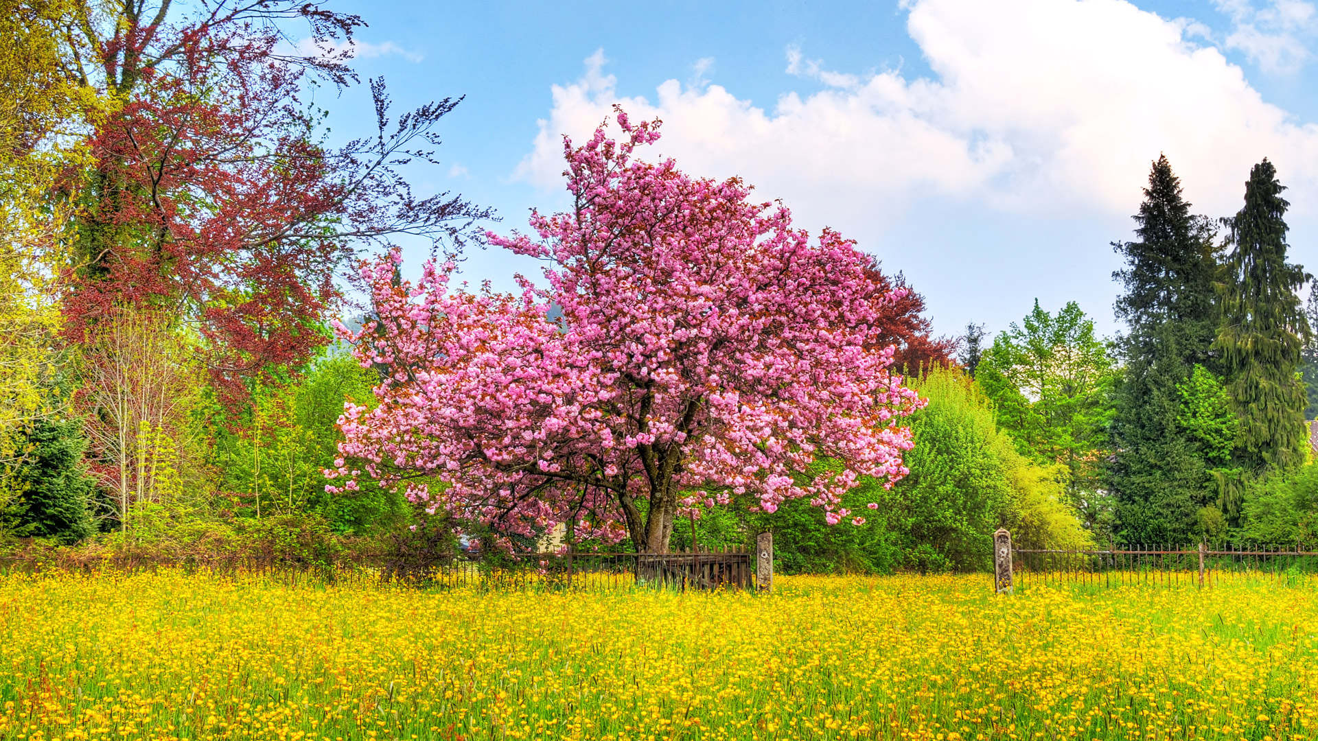 spring nature wallpapers 1080p - photo #4