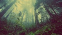 Desolate Forest 4K Wallpaper, HD