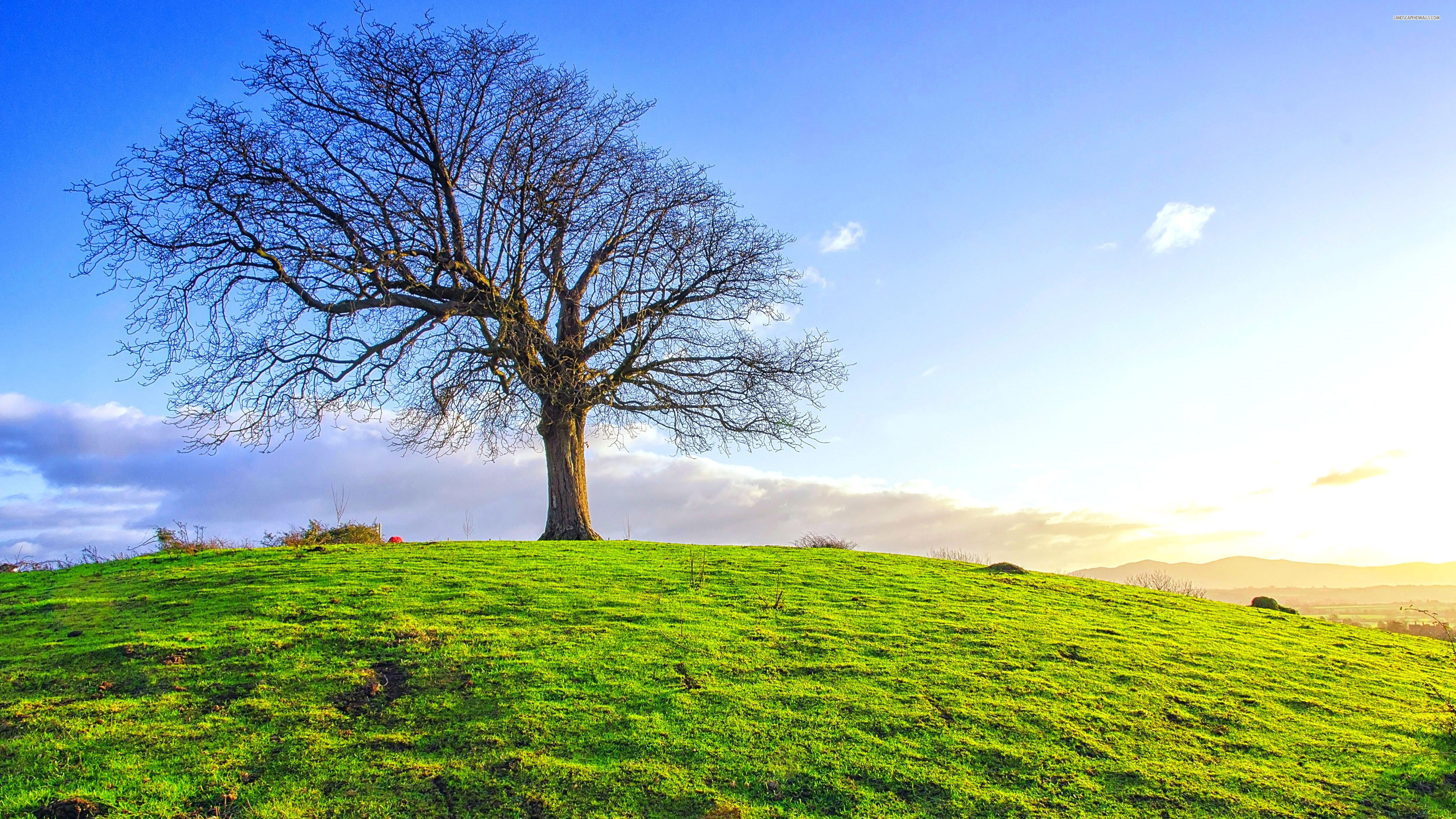 single tree on the green field | wide screen wallpaper 1080p,2k,4k