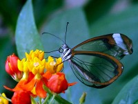 Beautiful Butterfly Wallpaper 474