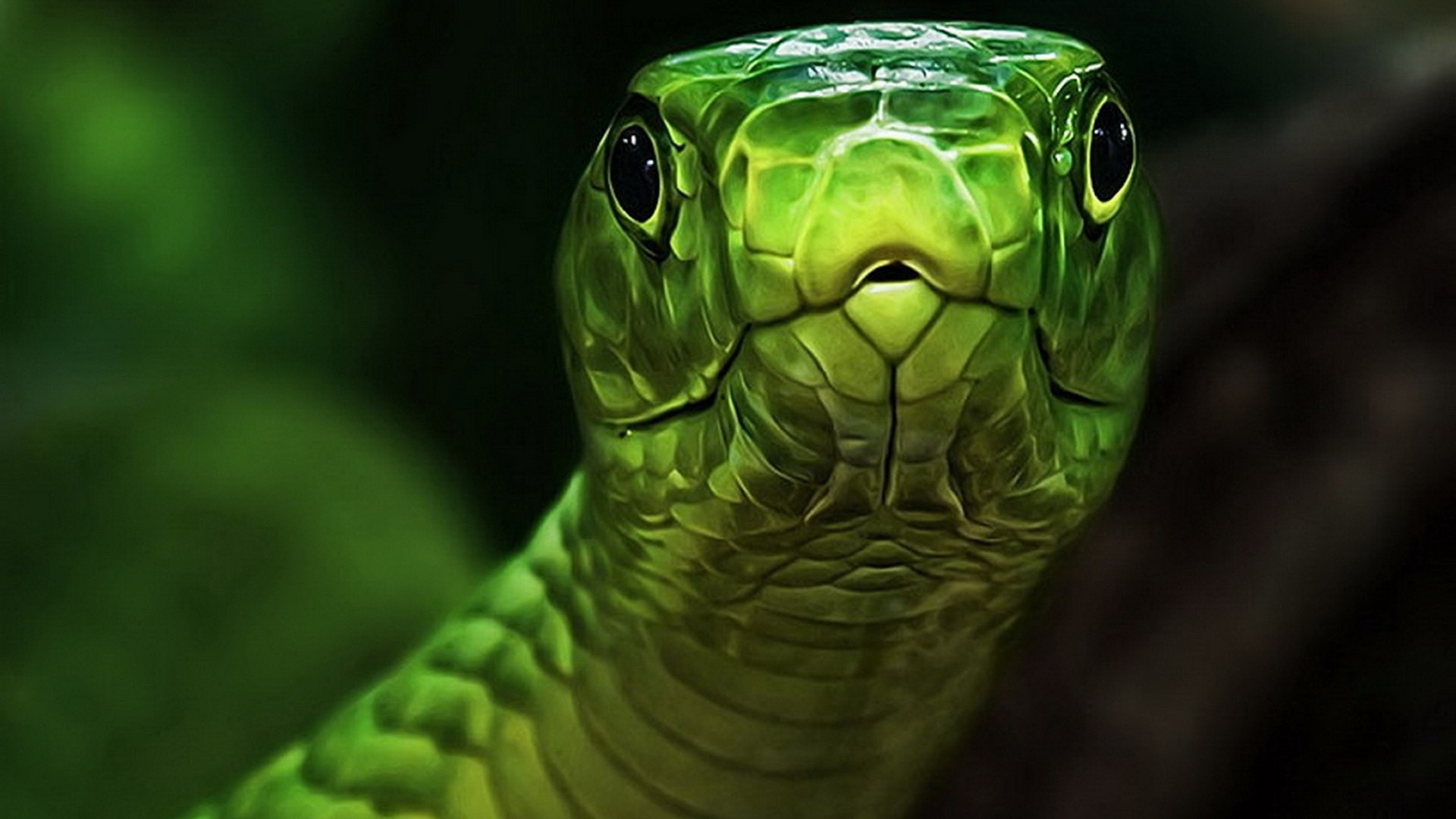 """What you lookin at"" Green Snake Wallpaper HD"