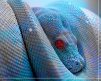 Blue Snake Wallpapers 17 HD