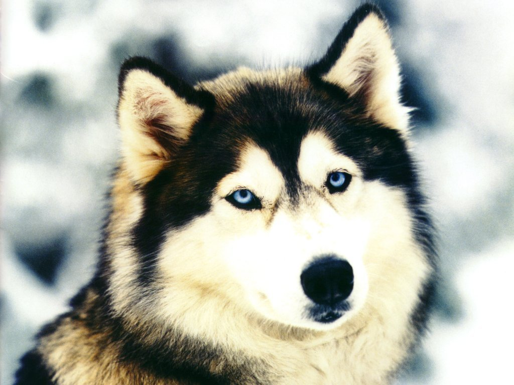 Dog Wallpapers 029