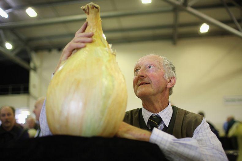 Peter Glazebrook World Record Onion